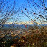 Villa con parco Moncalieri panoramica